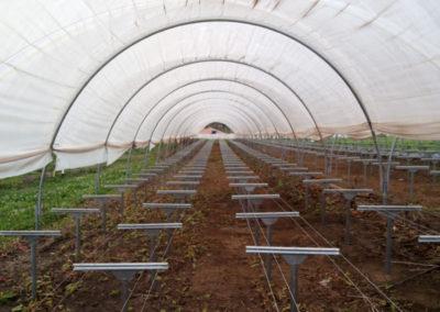 filme-agricola-para-estufa-1