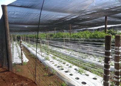 filme-agricola-para-estufa-10