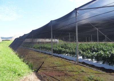 filme-agricola-para-estufa-11