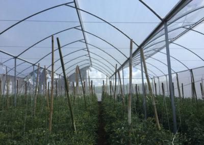 filme-agricola-para-estufa-19