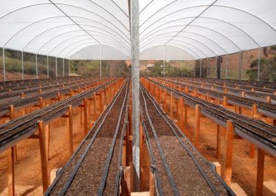 filme-agricola-para-estufa-5