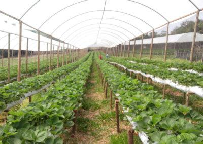 filme-agricola-para-estufa-6