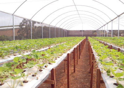 filme-agricola-para-estufa-7