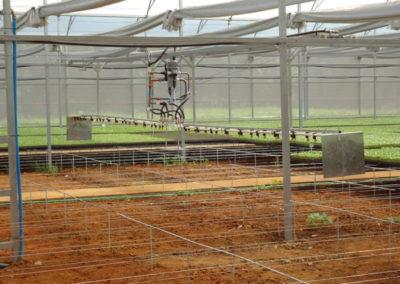 Estufa agrícola com irrigação
