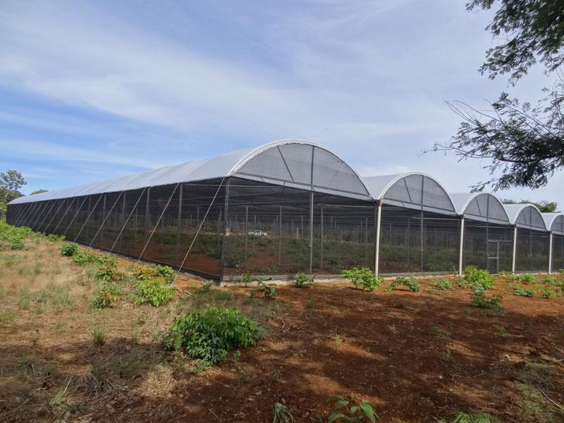 Estufa Agrícola em Tocantins
