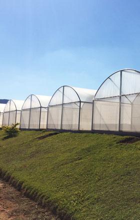 estufas agrícolas plasticultura