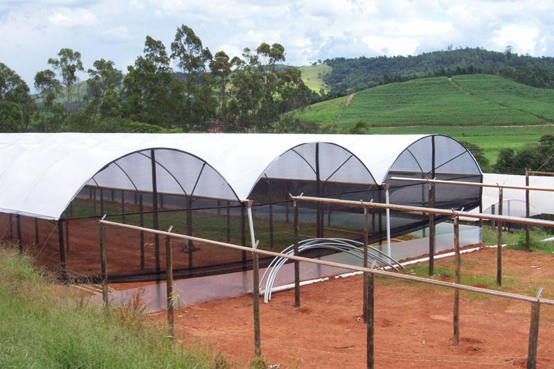 Estufa Agrícola