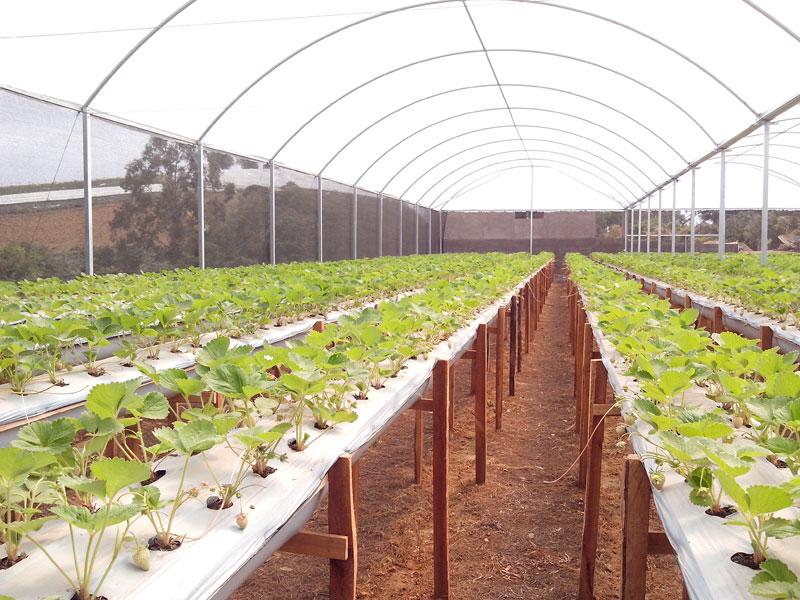 Estufa Agrícola em Fronteiras - PI