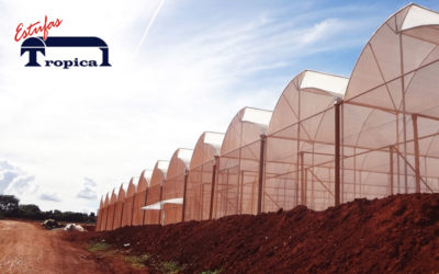 Estufa Agrícola – Melhor Preço – Financiamento