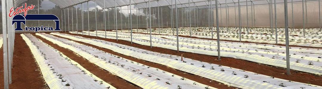 Estufa Agrícola - Melhor Preço - Financiamento - Promoção