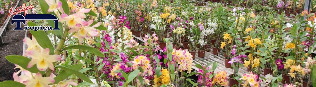 Estufa para Orquídeas Orquidário
