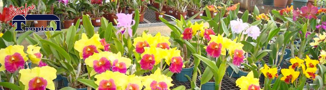 Estufa para Orquídeas Orquidários