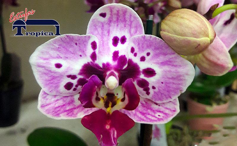Estufa para Orquídeas | Orquidários