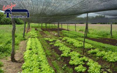 Lona para Estufa Agrícola | Tela de Sombreamento | Sombrite