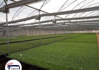 automacao-de-barra-de-irrigacao-estufas-agricolas-3