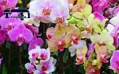Cultivo de Orquídeas de casa