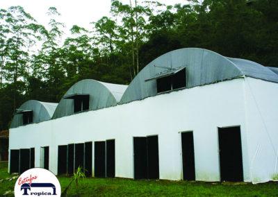estufa-agricola-para-cultivo-de-cogumelos-3