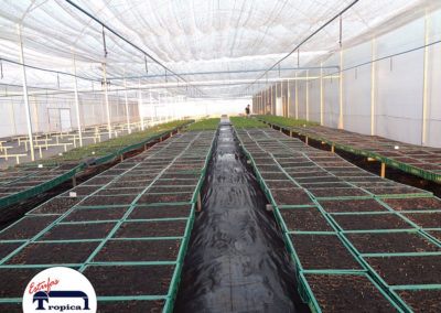 estufa-climatizacao-irrigacao-2